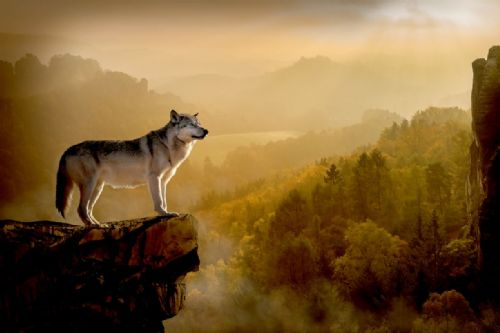 Wolf Canvas Wall Art -  Lone Wolf
